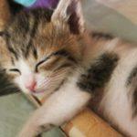 大切な猫ちゃんへ…ペット供養のお供え花なら楽天のフラワーキッチン