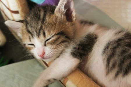 ペット供養のお供え花なら楽天のフラワーキッチンがイチオシ!大切な猫ちゃんへ…