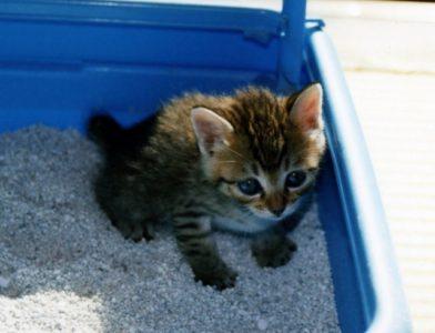 カイテキオリゴは猫のスッキリを促す?もっとも効果的な方法とは?