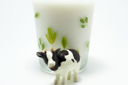 ミルクアレルギーの原因の牛