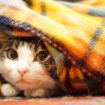 着る毛布レディースでおすすめの5選はコレ!かわいいし洗濯も簡単♪