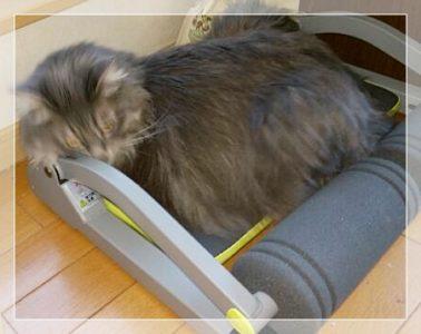 ワンダーコアスマートに乗る猫