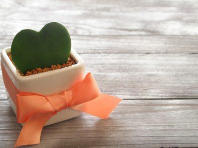 多肉植物ミニサボテンはギフトにぴったり♪通販でおすすめの7選
